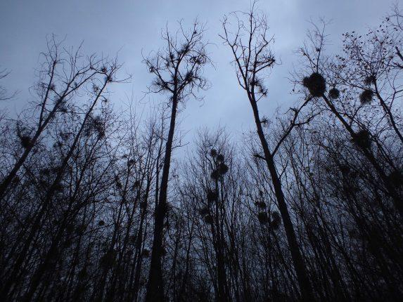 Découverte de la nature et de l'histoire d'une forêt au crépuscule à Amance le samedi 18 novembre 2017