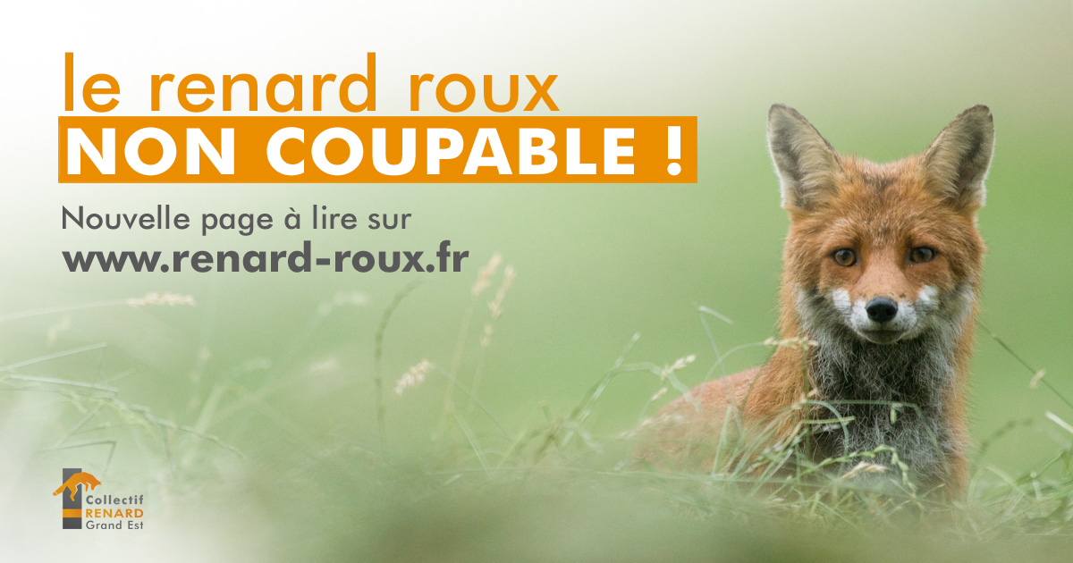 le-renard-non-coupable