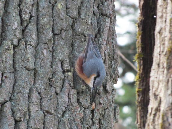 Découverte des arbres, des oiseaux et de la nature en milieu urbain