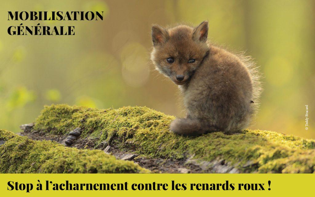 mobilisation générale renard roux