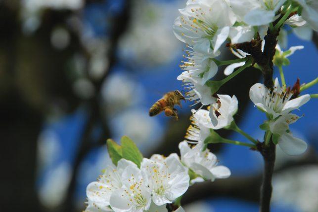 Conférence sur les abeilles mellifères à Laxou le vendredi 19 octobre 2018