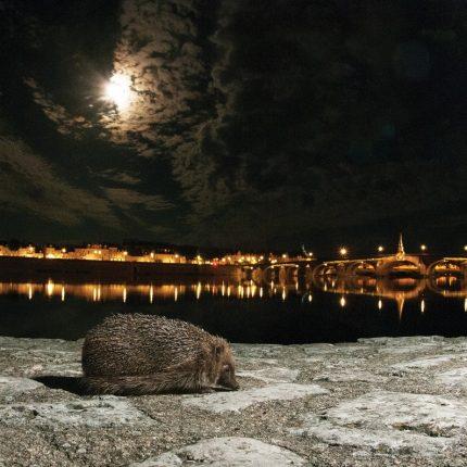 conférence sur le hérisson d'Europe à Laxou le vendredi 23 novembre 2018