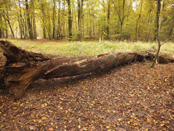 Balade d'automne en forêt le samedi 3 novembre 2018