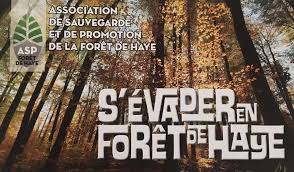 association sauvegarde et protection foret de haye