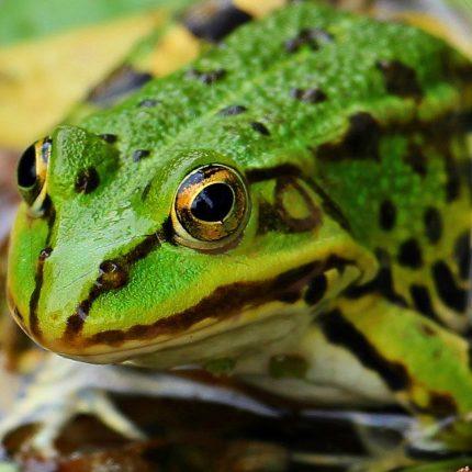 sortie découverte des amphibiens 2020