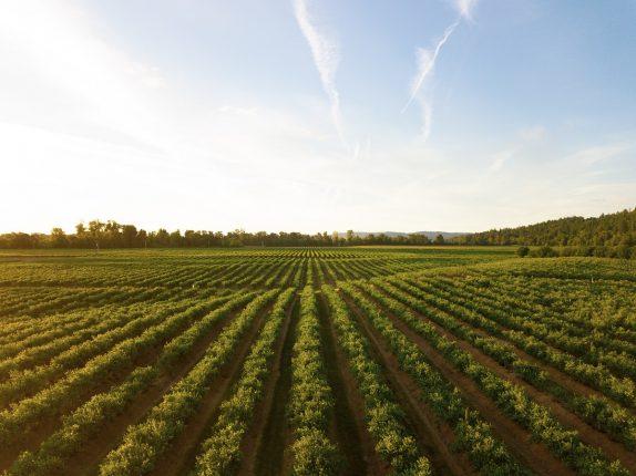 Non à l'assouplissement des règles d'utilisation des pesticides près des habitations