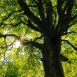 questionnaire arbres champêtres